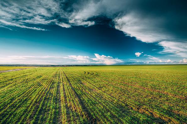 barley research
