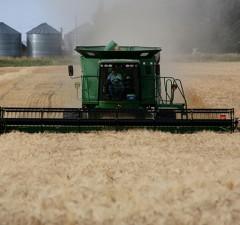 BarleyWeb2